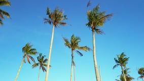 Strzałkowaci kierunki na asfaltowej drodze przy junctionVideo kokosowi drzewka palmowe kiwa z wiatrem zbiory