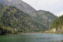 Strzałkowaty Bambusowy jezioro, Jiuzhaigou Obrazy Royalty Free