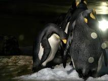 Strzał grupa pingwiny obraz stock