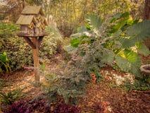 Strzelający birdhouse w drewnach Fotografia Stock