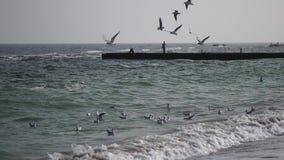 Strzeli?ci seagulls nad dennego wybrze?a Seascape zbiory wideo