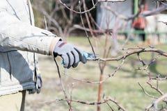 strzyżeń owocowi target4179_0_ drzewa zdjęcia stock