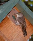 Strzyżyka Birdhouse Zdjęcia Royalty Free