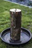 Stub шведского огня факела горящий на плите для остатков или сварить настроение еды chill Стоковые Изображения RF