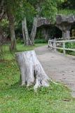 Stub of aged tree. Stub, stump, tree, wood aged bark chips cortex cut rind splinter royalty free stock images