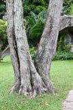 Stub of aged tree. Stub, stump, tree, wood aged bark chips cortex cut rind splinter Stock Photo