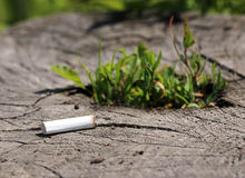 Stub of cigarette lying on a tree stump germinating Royalty Free Stock Photos
