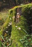 Stub fungi Stock Images