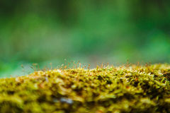 Stub in the  green grass Royalty Free Stock Photography