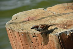Stub on lake adn bird. Stump stub remove natural nature organic ecology royalty free stock images