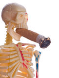 Stub and skeleton Stock Photography