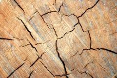 Free Stub Texture Stock Photography - 11314372