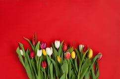 Stubarwna tulipan wiązka Zdjęcia Stock