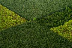 Stubarwni drewna Fotografia Royalty Free