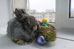 stubarwni Easter jajka Obrazy Royalty Free