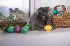 stubarwni Easter jajka Zdjęcia Royalty Free
