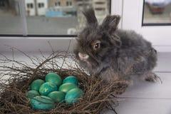 stubarwni Easter jajka Obraz Royalty Free