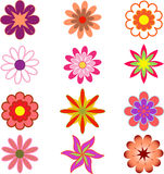 Stubarwni kwiaty, kwiat ilustracja, Whiet Obraz Royalty Free