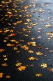 Stubarwni liście klonowi na asfalcie po deszczu w jesieni Zdjęcie Stock