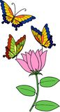 Stubarwni motyle na menchia kwiacie z zielonymi liśćmi Fotografia Stock
