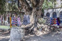Stubarwni serapes wiesza na pętlach i z wielkim bagażnikiem drzewo fotografia stock
