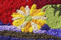 Stubarwny kwiecisty dywan Fotografia Royalty Free