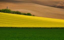 Stubarwny Wiejski krajobraz Zielony pole banatka, pasek Żółty kwiecenie gwałt I Brown Zaorany grunt orny, Falisty Kultywuje obrazy stock