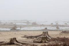 Stubbar i dimman Arkivbilder