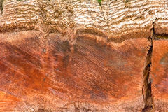 Stubbe i skogen Fotografering för Bildbyråer