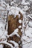 Stubbe i snön Fotografering för Bildbyråer