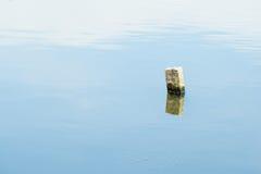 Stubbe i vatten Royaltyfri Foto