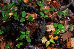 Stubbe med grönska Royaltyfri Bild