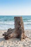 Stubbe med havsbakgrund Royaltyfri Bild