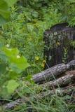 Stubbe- och gulingblommor Royaltyfria Foton