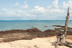 Stubbe på stranden av ön i Thailand royaltyfria bilder