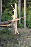Stubbe/stump av ett brutet prydligt träd i en skog efter en storm Fotografering för Bildbyråer