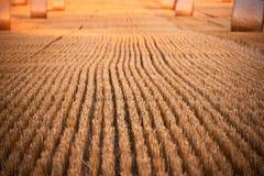 stubbelfield na op zonnige dag Stock Foto
