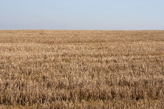 Stubble. Empty wheat field - end of the season Stock Image