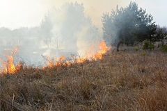 Stubble burning in meadow. Stock Image