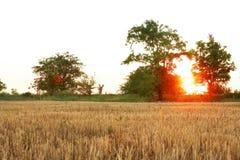 Stubble-Feld am Sonnenuntergang stockbild