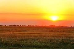 Stubble-Feld am Sonnenuntergang lizenzfreies stockbild