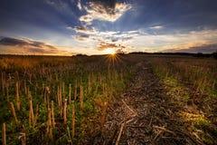 Stubble-Feld am Sonnenuntergang Stockfotos
