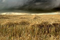 Stubble-field of. Field of cereals after harvest season with storm cloud Stock Photos