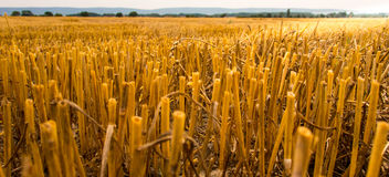 Free Stubble Field Stock Photography - 34034932