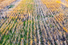 Stubble Field Stock Image