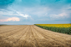 Stubble field. In an agricultural landscape Stock Images