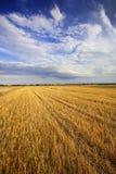 Stubble Field Stock Photo