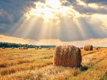 Free Stubble Field And Hay Bales Royalty Free Stock Photo - 130698715