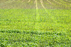 Stubble field Royalty Free Stock Photos