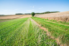 Stubble field Stock Images